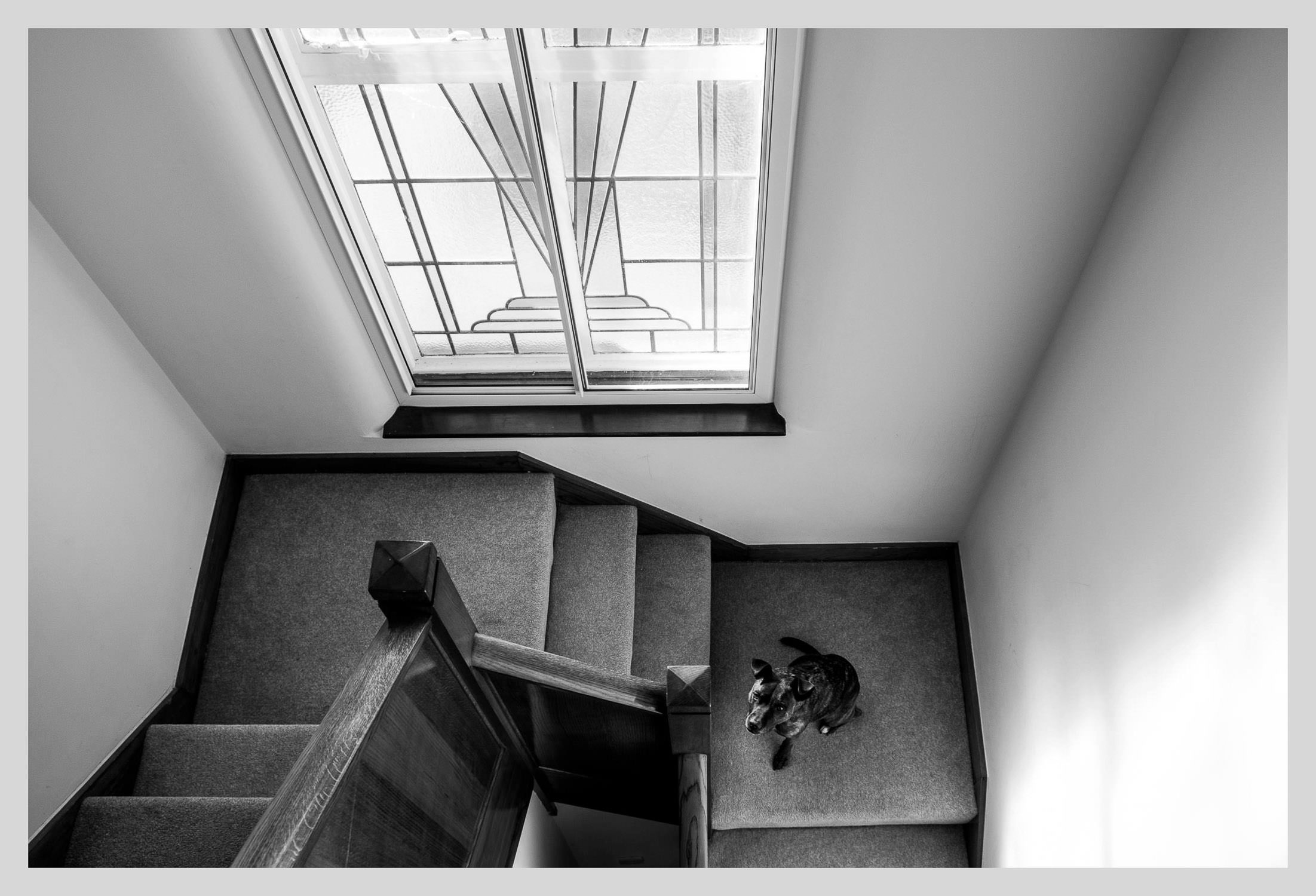 black and white photograph of dog o staircase