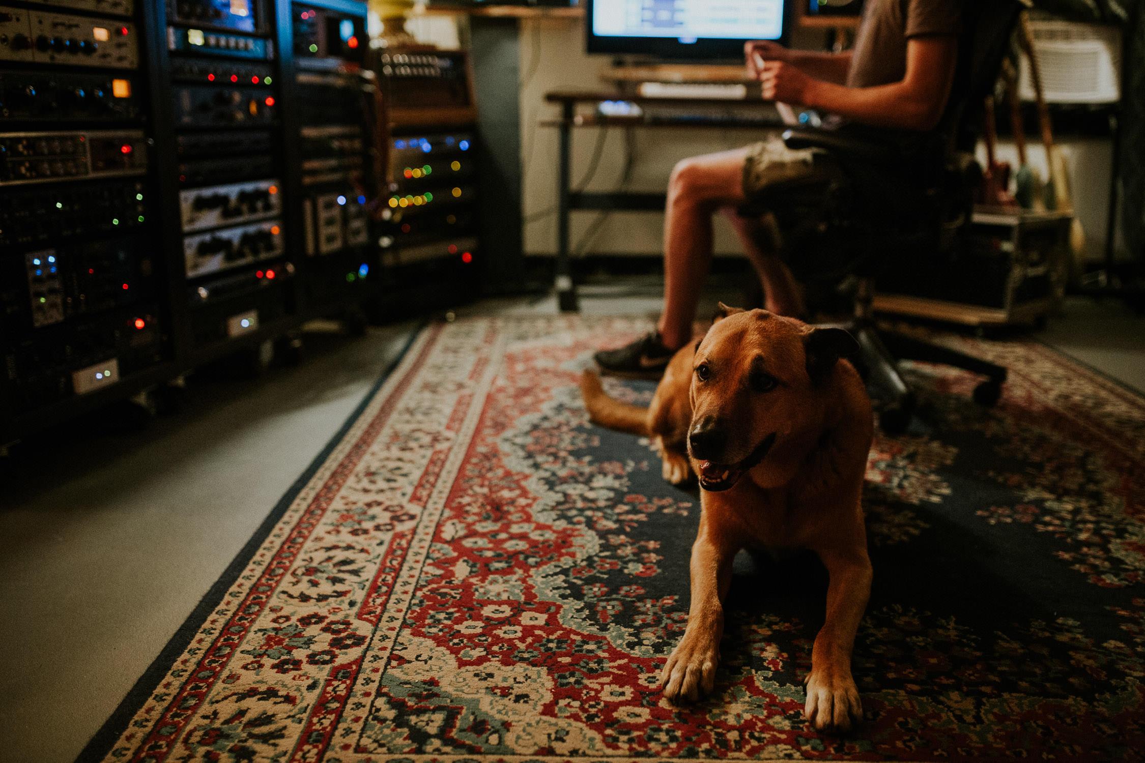 brown dog on Persian carpet