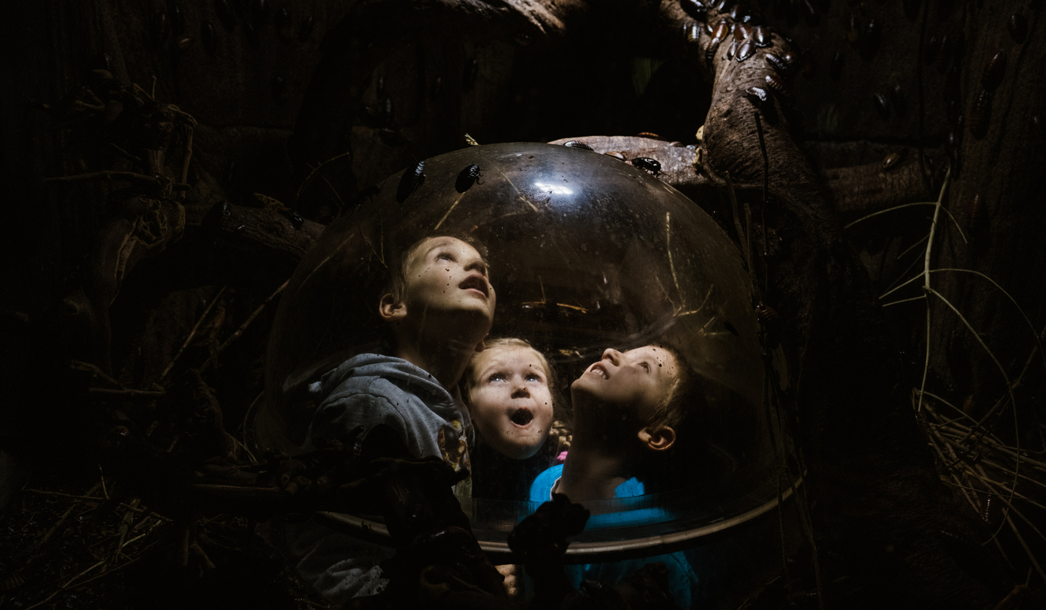 three kids looking at bugs at London's aquarium photographed by a ralu chase - a family photographer in London