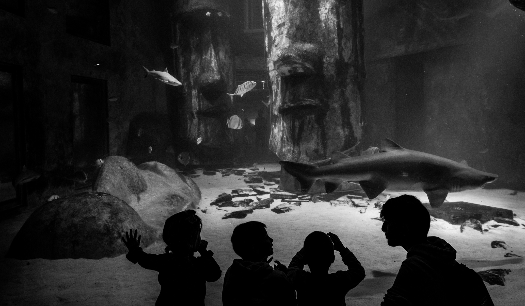 kids at the aquarium in London during a family photoshoot