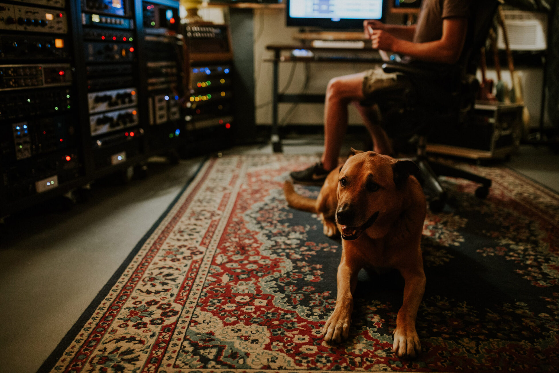 a dog enjoying his little space at a recording studio branding photography session