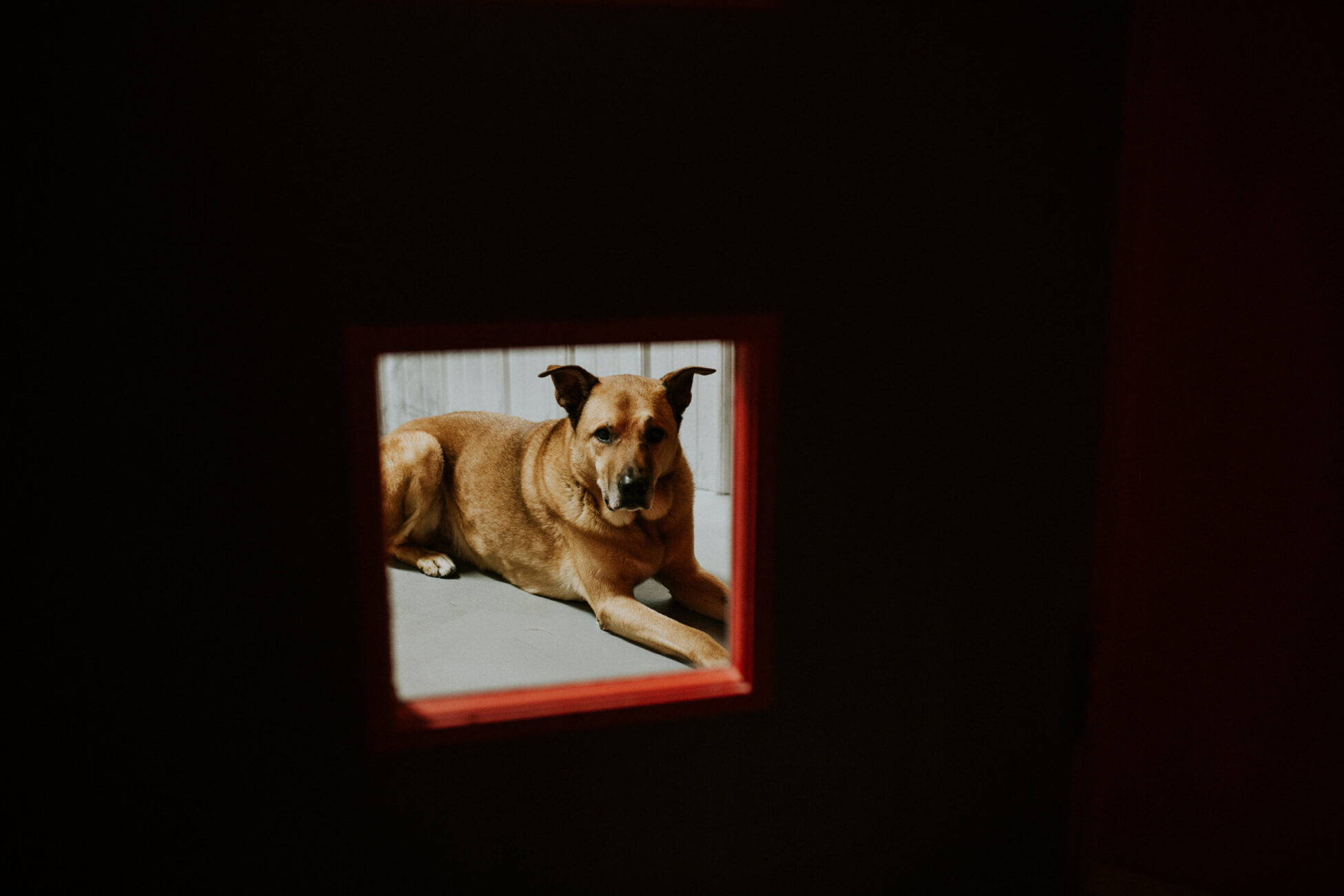a dog looking through a small door window in a recording studio during a branding photo session