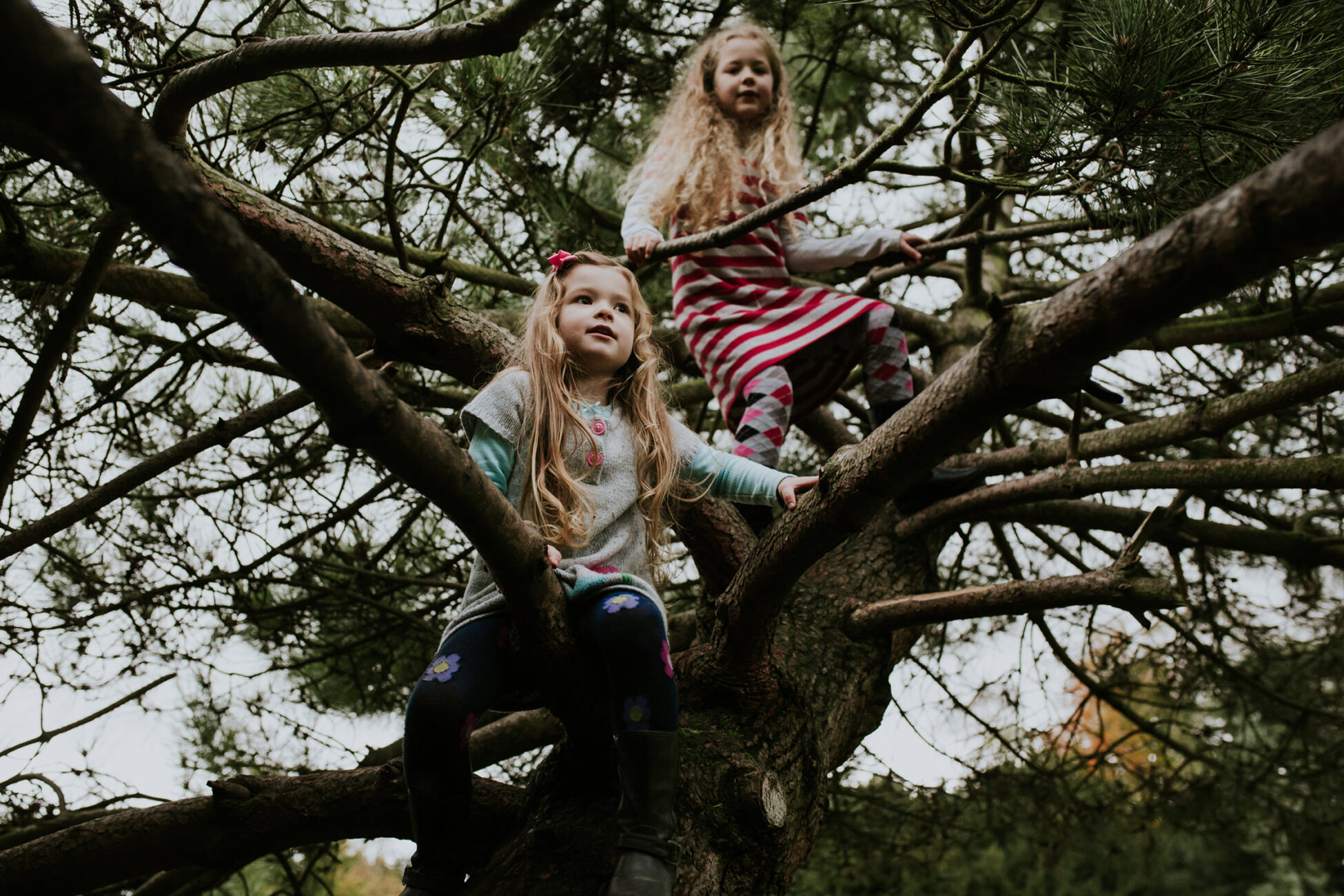 two little girls climbing a tree during a family photo session